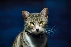Portrait of Teri stock photo