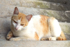 Portrait of Thai cat. Is Sleeping on the roof tile , Thailand stock photo