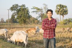 Portrait of Thai cowboy in a field. Portrait of Thai cowboy standing and smile with cows in a field Stock Photography