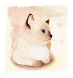 Portrait of Thai kitten . Stock Image