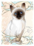 Portrait of Thai kitten Royalty Free Stock Photography