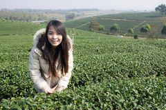 Portrait Thai woman in tea plantation , Chiangrai Thailand Royalty Free Stock Photography