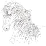 Portrait of them head horse mane Line Illustration Royalty Free Stock Images