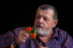 Portrait of a thoughtful senior man in striped shirt with small branch of Chinese Schizandra Stock Photography
