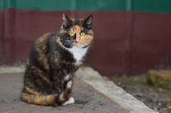 Portrait of three colored city cat Stock Image
