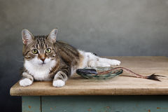 Cat and Herring Stock Photography