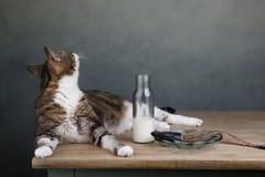 Cat and Herring Stock Photos