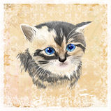 Portrait of three-colored kitten . Royalty Free Stock Images