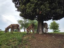 Three donkeys in the countryside stock image