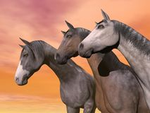 Portrait of three horses - 3D render Stock Photography
