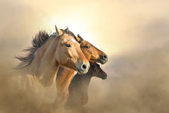 Portrait of three mustang Stock Photo