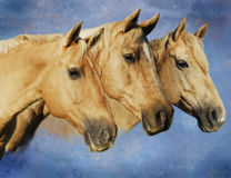 Portrait of Three Palomino Horses Royalty Free Stock Photography