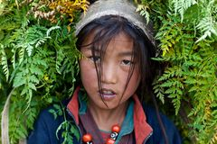 Portrait of Tibetan girl Stock Image