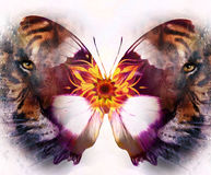 Portrait tiger and butterfly. computer collage Royalty Free Stock Image