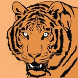 Portrait of tiger. Decorative portrait of tiger. Illustration in orange color royalty free illustration