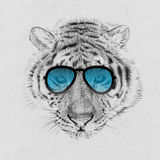 Portrait of tiger drawn by hand in pencil in sunglasses Stock Photos