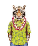 Portrait of Tiger in summer shirt with Hawaiian Lei. Royalty Free Stock Image
