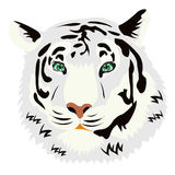 Portrait of the tiger on white background Stock Image