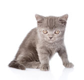 Portrait tiny gray kitten. isolated on white background Stock Image