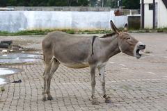 Portrait of a tired african donkey Stock Photo
