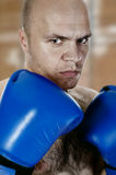 Portrait of a tired boxer Royalty Free Stock Images