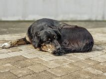Portrait of tired and sad dog resting on a sidewalk. royalty free stock photos