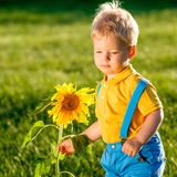 One year old baby boy looking at sunflower Royalty Free Stock Photography