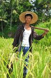 Portrait of traditional rice farmer Royalty Free Stock Images
