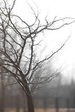 Portrait of tree after rain. Wet tree in fog right after rain Royalty Free Stock Photography