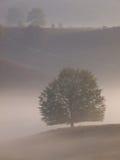 Portrait tree silhouette on hill Stock Photo