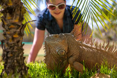 Portrait of tropical iguana Royalty Free Stock Images
