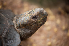 Portrait of a turtle Stock Images