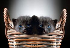 Two Adorable Black Kittens in Basket