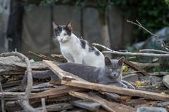 Portrait of a two adult cats stock photos