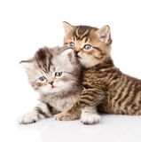 Portrait of two british kittens. isolated on white background Royalty Free Stock Photos