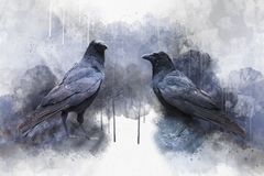Portrait of two Crow birds, watercolor painting. Bird illustration.  stock photos