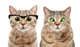 Portrait of two cute cats with eye diseases Royalty Free Stock Photo