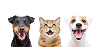 Portrait of two cute dogs and funny cat. Isolated on white background royalty free stock photography