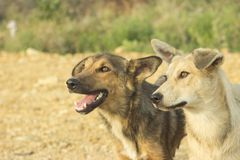 Portrait of two cute dogs stock photography