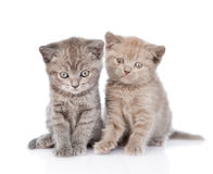 Portrait two cute kittens. isolated on white background Royalty Free Stock Photography