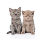 Portrait two cute kittens. isolated on white background Stock Photo