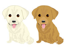 Portrait of two cute labrador puppies Royalty Free Stock Photography