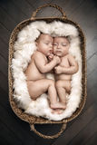 Portrait of two cute newborn borthers in the basket Stock Photo