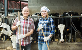 Portrait of two farm workers near cows barn. Mature and young farm employees posing near cows barn outdoors Stock Image