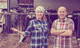 Portrait of two farm workers near cows barn. Mature and young farm employees posing near cows barn outdoors Stock Photo