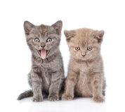 Portrait two funny kittens.  on white background Stock Image