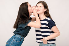 Portrait of a two girls gossip on gray background Stock Photos