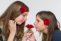 Portrait of two girls smelling red rose. Portrait of two caucasian teenage girls smelling red rose isolated on grey white background Stock Photos