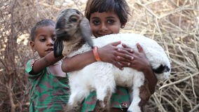 Portrait of two Indian girls, one holding a lamb in her hands. JODHPUR, INDIA - 13 FEBRUARY 2015: Portrait of two Indian girls, one holding a lamb in her hands stock video footage