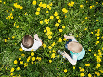 Portrait of two little boys together sitting in dandelion field. Outdoor Stock Photos